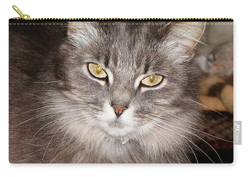 Cat Carry-all Pouch featuring the photograph You Think by Jussta Jussta