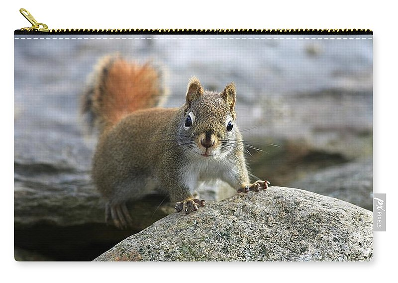 Animal Carry-all Pouch featuring the photograph You Wanna Chat by Deborah Benoit