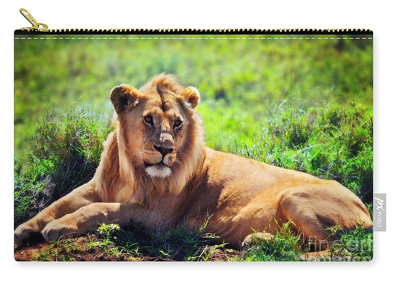 Lion Carry-all Pouch featuring the photograph Young Adult Male Lion On Savanna. Safari In Serengeti. Tanzania by Michal Bednarek