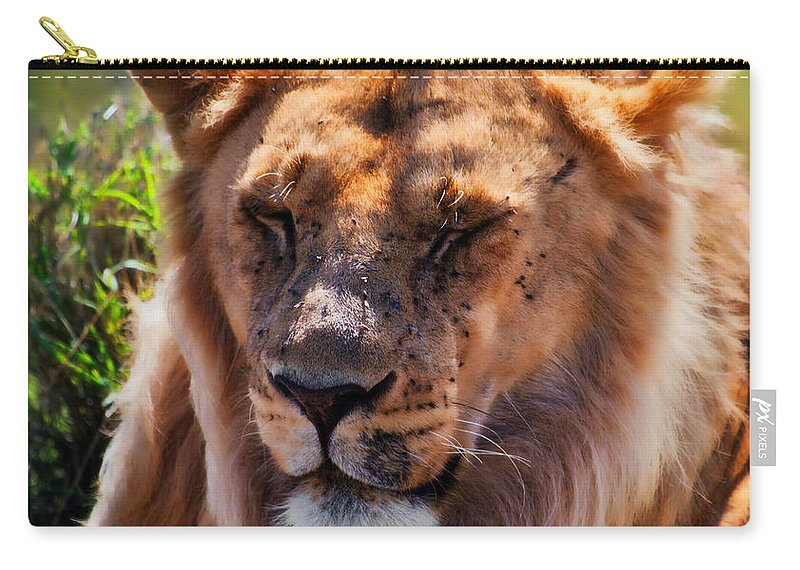 Lion Carry-all Pouch featuring the photograph Young Adult Male Lion Portrait. Safari In Serengeti by Michal Bednarek
