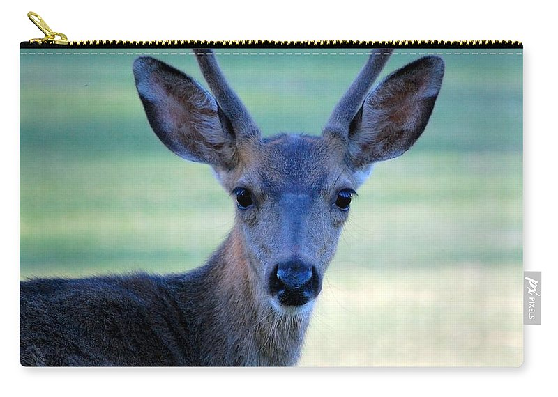 Wildlife Carry-all Pouch featuring the photograph Young Buck by AJ Schibig