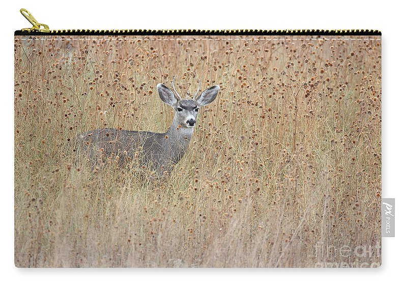 Mule Deer Carry-all Pouch featuring the photograph Young Buck by Bryan Keil
