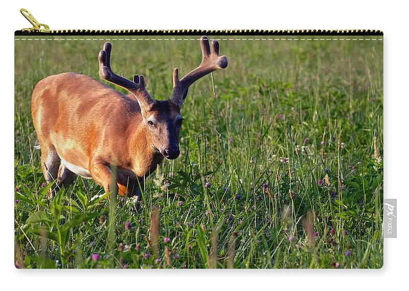 Cades Cove Carry-all Pouch featuring the photograph Young Buck by Eleanor Abramson
