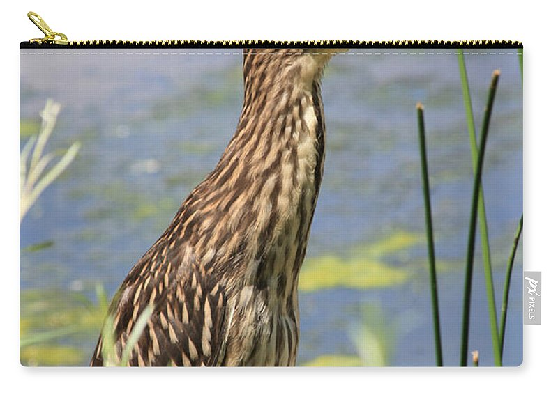 Black Crowned Night Heron Carry-all Pouch featuring the photograph Young Heron by Shane Bechler