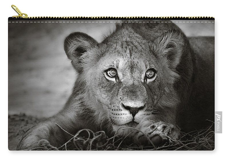Wild Carry-all Pouch featuring the photograph Young Lion Portrait by Johan Swanepoel