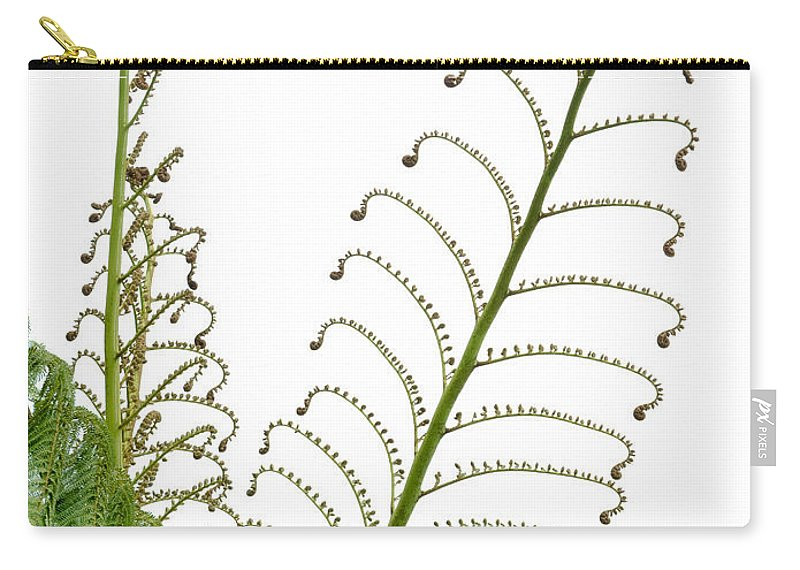 Botanical Carry-all Pouch featuring the photograph Young Spring Fronds Of Silver Tree Fern On White by Stephan Pietzko