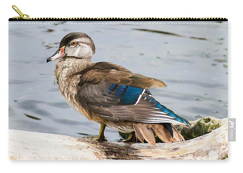 Woodie Carry-all Pouch featuring the photograph Young Wood Duck by Nikki Vig