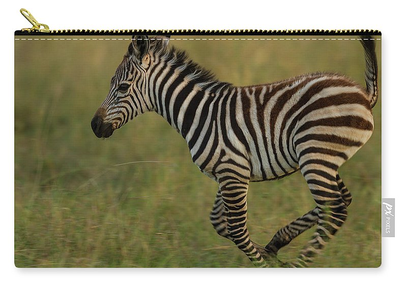 Plains Zebra Carry-all Pouch featuring the photograph Zebra Foal Running For Joy by Manoj Shah