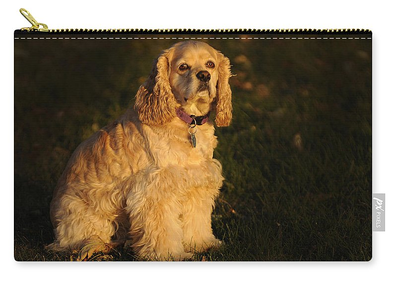 Dog Carry-all Pouch featuring the photograph American Cocker Spaniel by Randall Branham