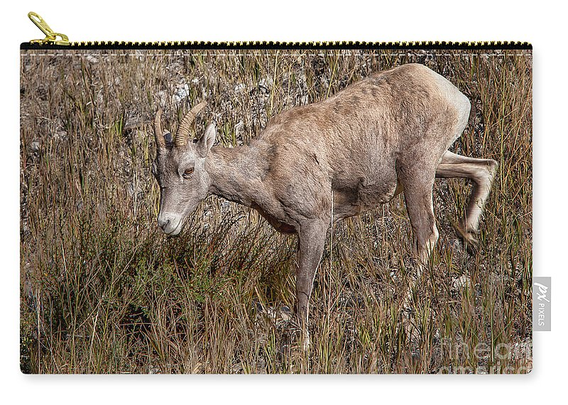 Sheep Carry-all Pouch featuring the photograph Bighorn Ewe by Ronald Lutz