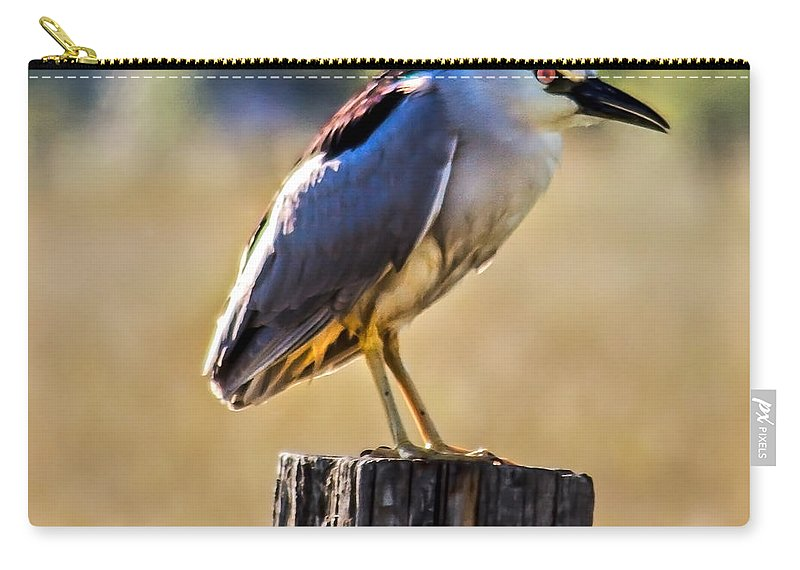Birds Carry-all Pouch featuring the photograph Black-crowned Night Heron by Robert Bales