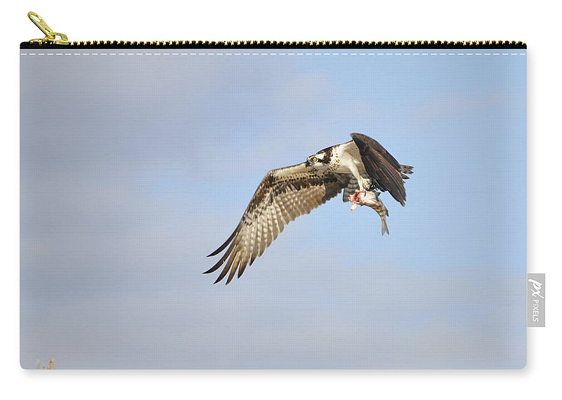Osprey Carry-all Pouch featuring the photograph Osprey Lunch To Go I by Christine Stonebridge