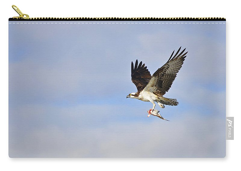 Osprey Carry-all Pouch featuring the photograph Osprey Lunch To Go II by Christine Stonebridge