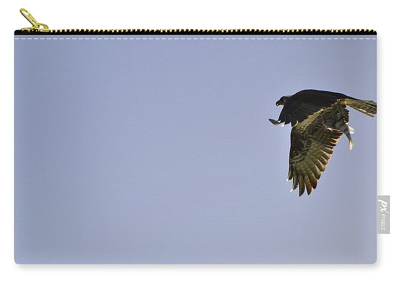 Osprey Carry-all Pouch featuring the photograph Osprey Lunch To Go III by Christine Stonebridge