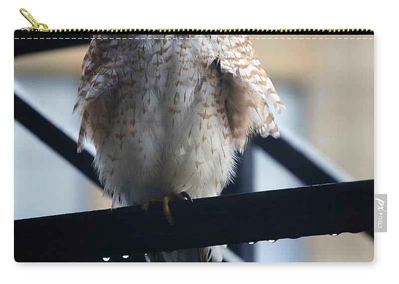 Carry-all Pouch featuring the photograph 01 Falcon by Michael Frank Jr