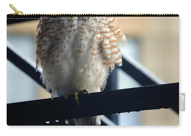Carry-all Pouch featuring the photograph 03 Falcon by Michael Frank Jr