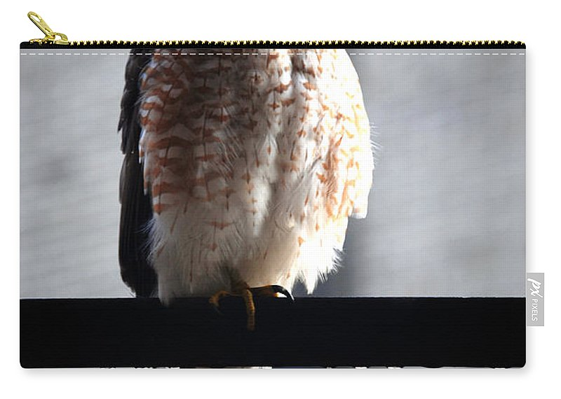 Carry-all Pouch featuring the photograph 05 Falcon by Michael Frank Jr