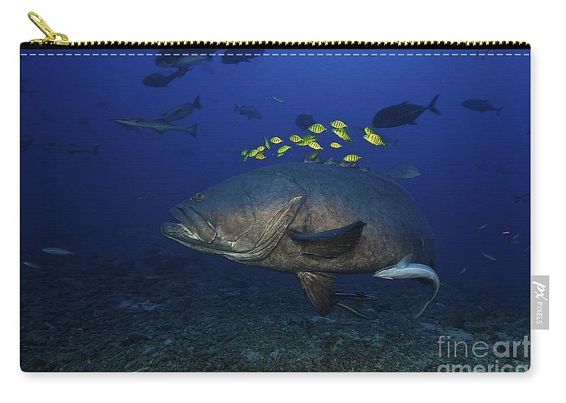 Epinephelus Lanceolatus Carry-all Pouch featuring the photograph A School Of Golden Trevally Follow by Terry Moore