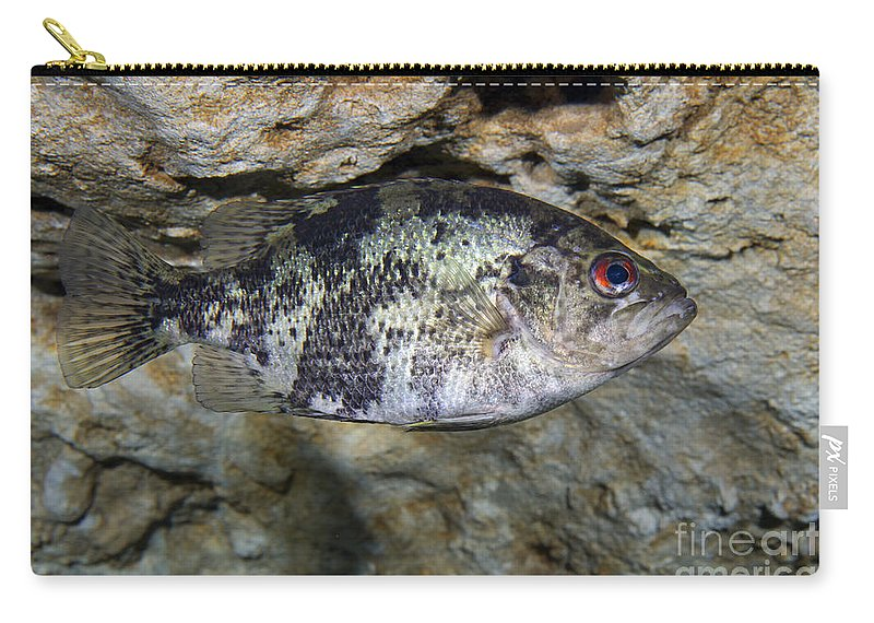 Fish Carry-all Pouch featuring the photograph A Shadow Bass Hovers Motionless by Terry Moore