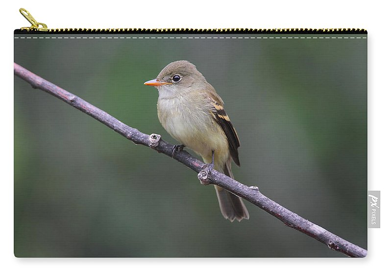 Doug Lloyd Carry-all Pouch featuring the photograph Alder Flycatcher by Doug Lloyd