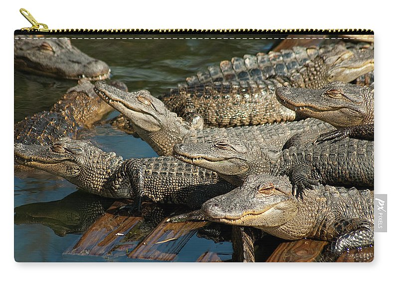 Alligator Carry-all Pouch featuring the photograph Alligator Pool Party by Carolyn Marshall
