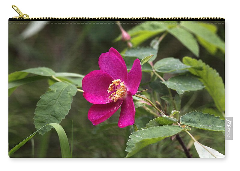 Doug Lloyd Carry-all Pouch featuring the photograph Arctic Rose by Doug Lloyd