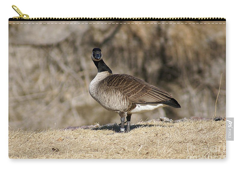 Goose Carry-all Pouch featuring the photograph Are You Looking At Me by Lori Tordsen