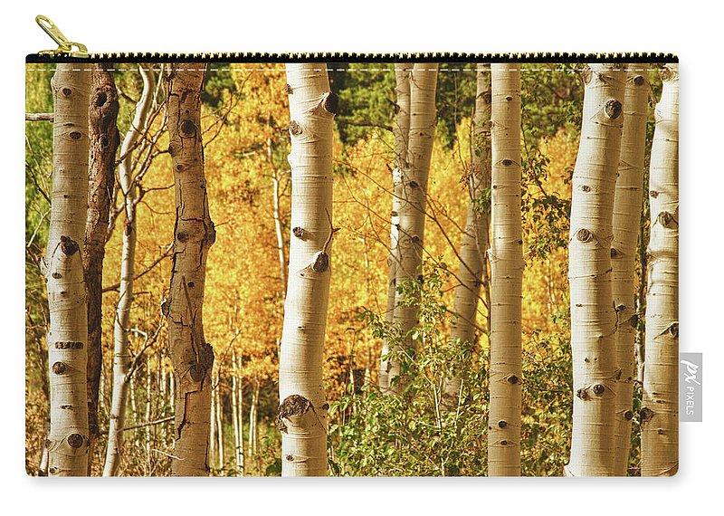 Autumn Carry-all Pouch featuring the photograph Aspen Gold by James BO Insogna