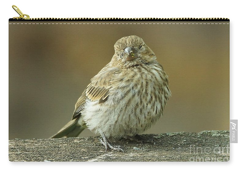 House Finch Carry-all Pouch featuring the photograph Baby House Finch by Lori Tordsen
