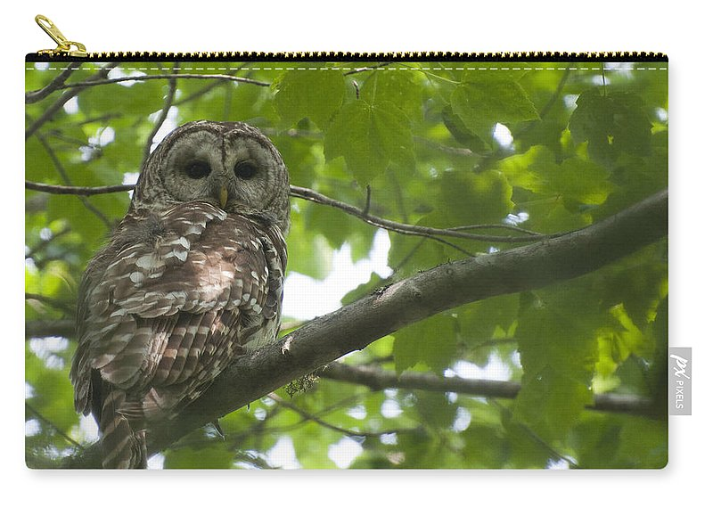 Owl Carry-all Pouch featuring the photograph Barred Owl by Glenn Gordon