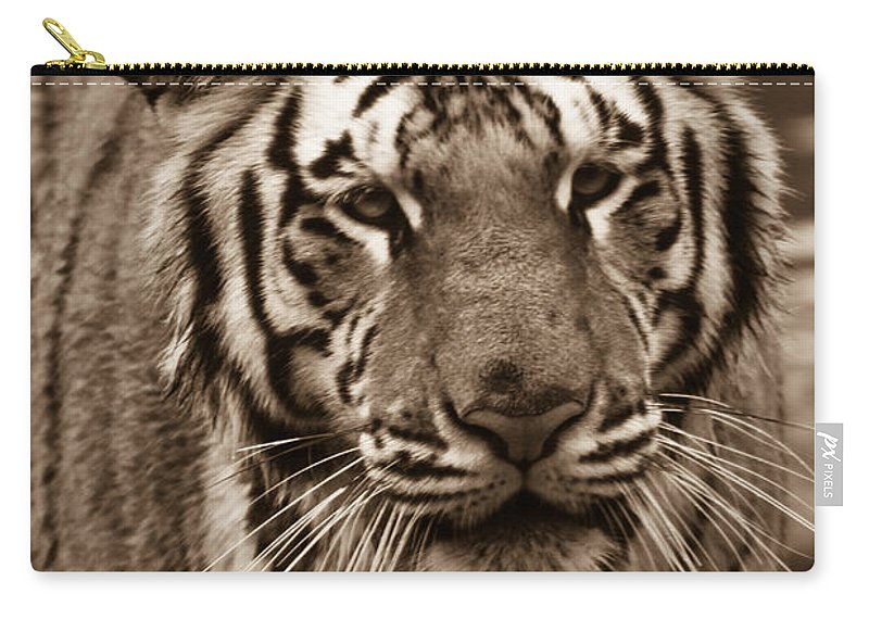 Bengal Carry-all Pouch featuring the photograph Bengal Tiger On The Prowl by Douglas Barnett