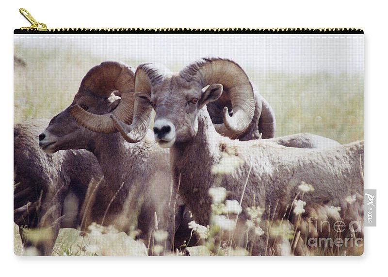 Nature Carry-all Pouch featuring the photograph Bighorn Sheep by Maili Page
