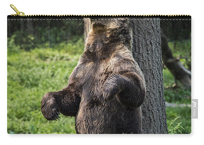 Brown Bear Carry-all Pouch featuring the photograph Brown Bear Itch by John Greim