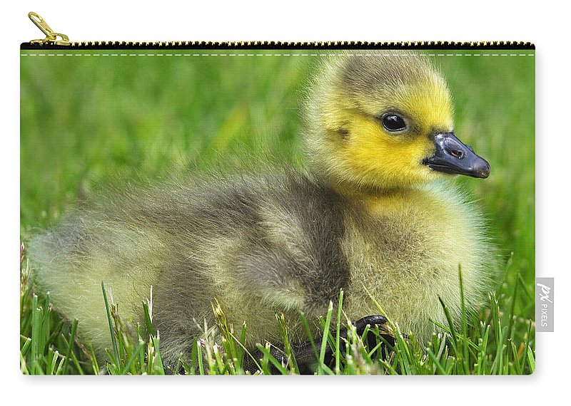 Canada Goose Carry-all Pouch featuring the photograph Canada Gosling by Tony Beck