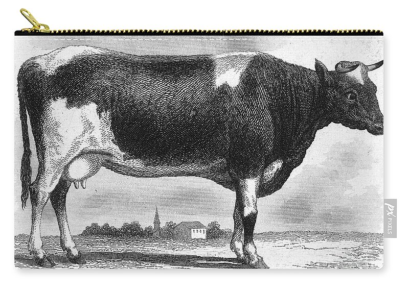 19th Century Carry-all Pouch featuring the photograph Cattle, 19th Century by Granger