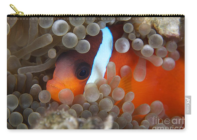 Amphiprion Melanopus Carry-all Pouch featuring the photograph Cinnamon Clownfish In Its Host Anemone by Terry Moore