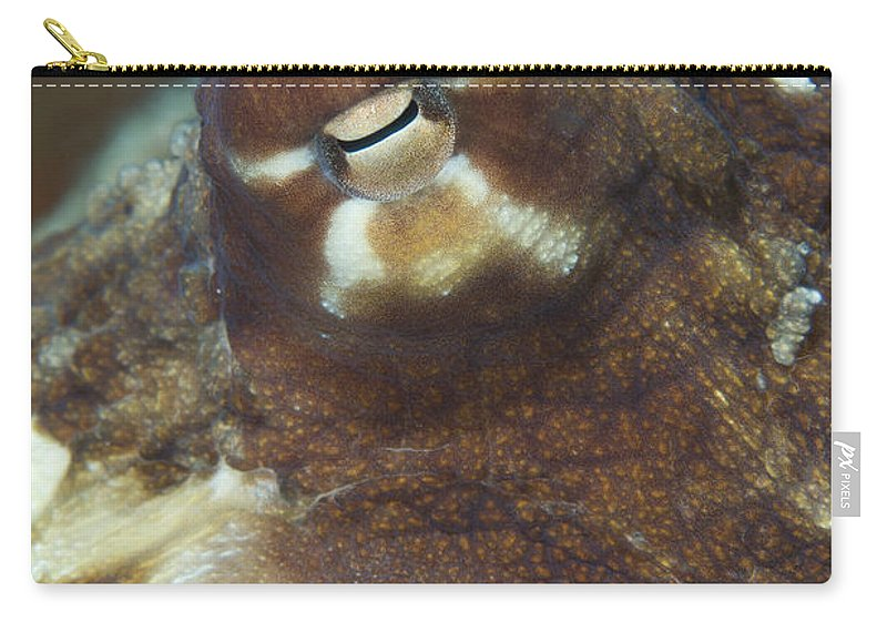 Common Octopus Carry-all Pouch featuring the photograph Close-up View Of A Common Octopus by Steve Jones