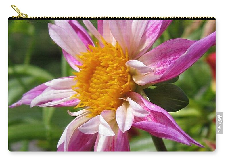 Dahlia Carry-all Pouch featuring the photograph Dahlia Named Lorona Dawn by J McCombie