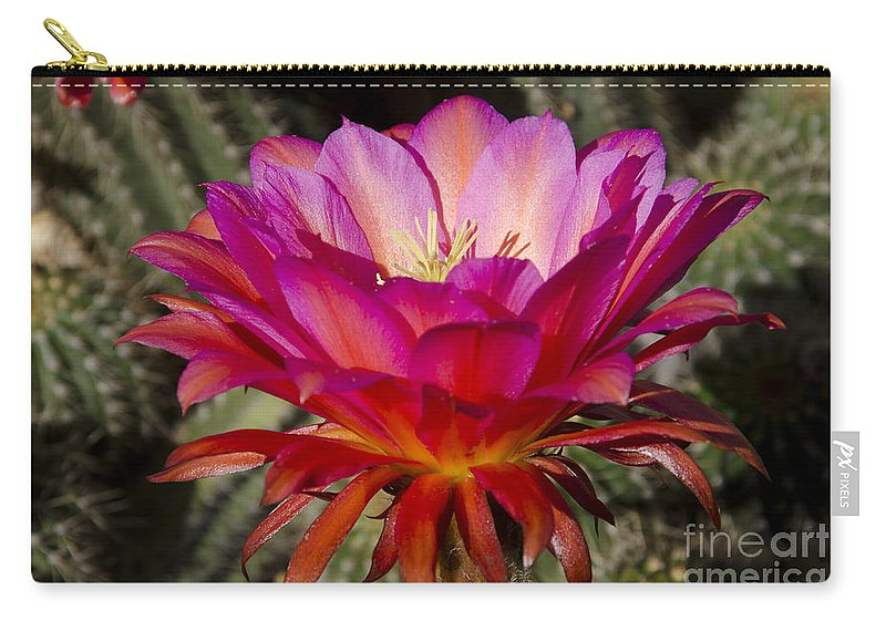 Red Carry-all Pouch featuring the photograph Dark Pink Cactus Flower by Jim And Emily Bush