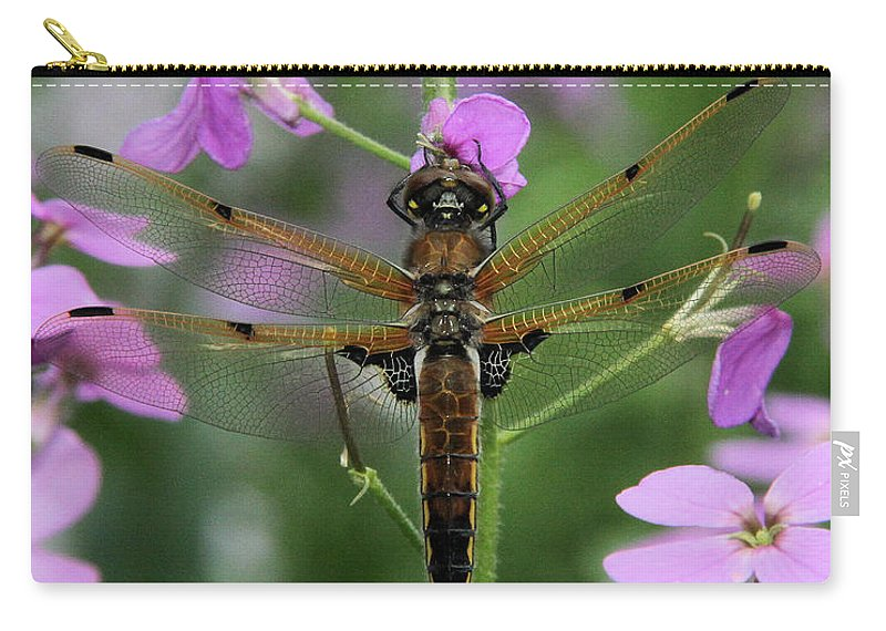 Four-spotted Skimmer Carry-all Pouch featuring the photograph Four-spotted Skimmer by Doris Potter