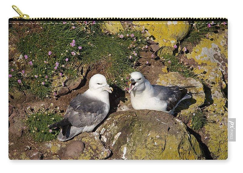 Fulmarus Glacialis Carry-all Pouch featuring the photograph Fulmar Pair Bonding by Howard Kennedy