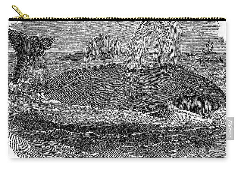 19th Century Carry-all Pouch featuring the photograph Greenland Whale by Granger