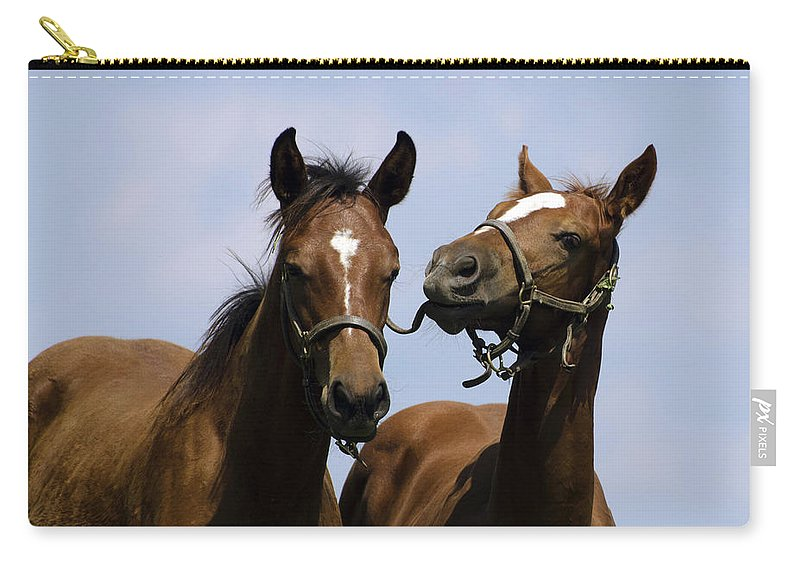 Horse Carry-all Pouch featuring the photograph Horse Foul Play Iv by Terri Winkler