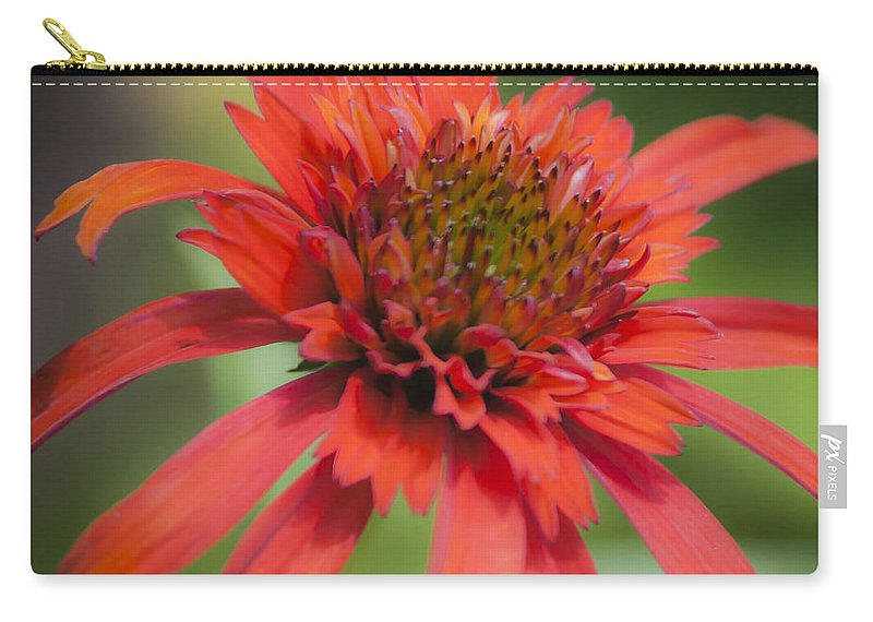 Coneflower Carry-all Pouch featuring the photograph Hot Papaya Coneflower Squared by Teresa Mucha