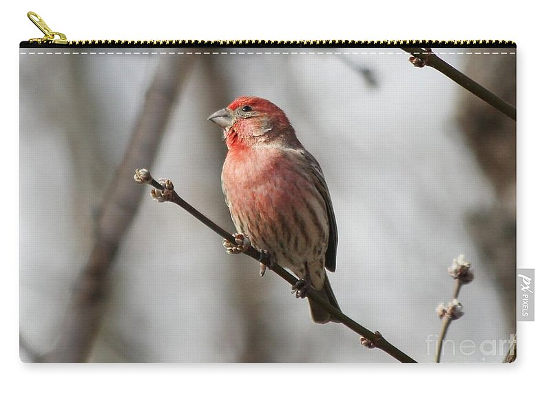 Finch Carry-all Pouch featuring the photograph House Finch by Lori Tordsen