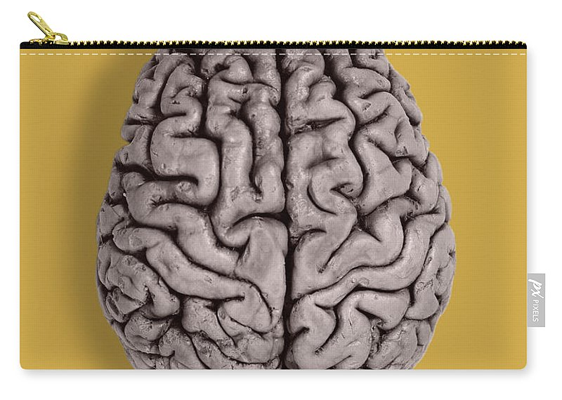 Brain Carry-all Pouch featuring the photograph Human Brain by Omikron