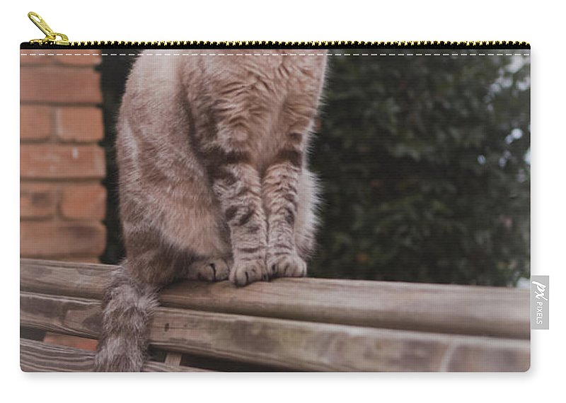 Cats Carry-all Pouch featuring the photograph Jaspurr by Kim Henderson