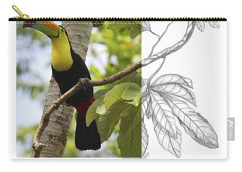Keel-billed Toucan Carry-all Pouch featuring the photograph Keel-billed Toucan by Andrew McInnes