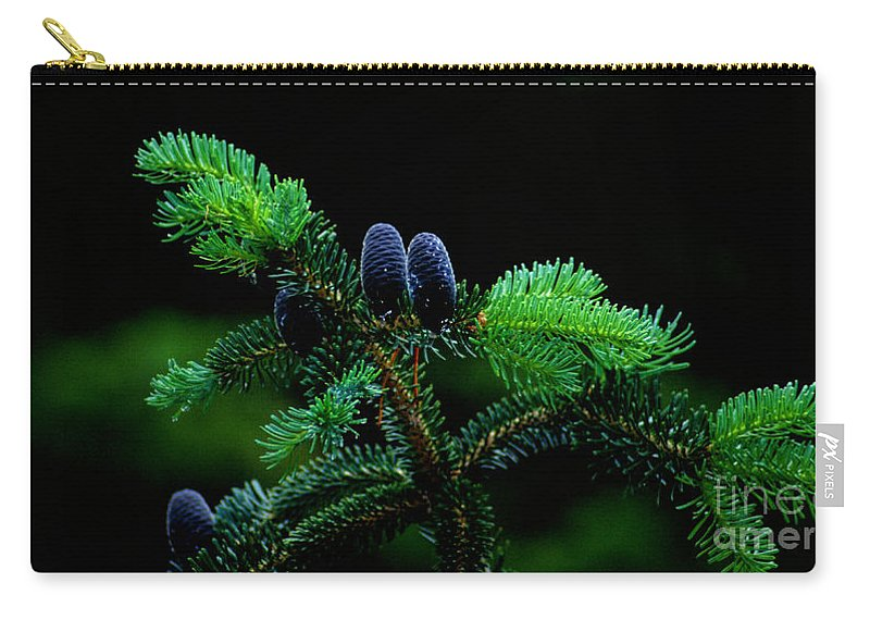 Pine Cones Carry-all Pouch featuring the photograph Mountain Life by Sharon Elliott