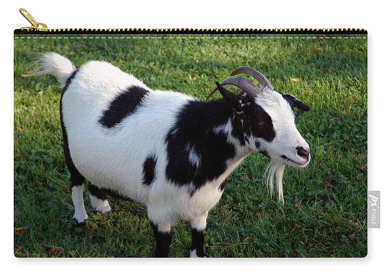 Usa Carry-all Pouch featuring the photograph Old Goat by LeeAnn McLaneGoetz McLaneGoetzStudioLLCcom